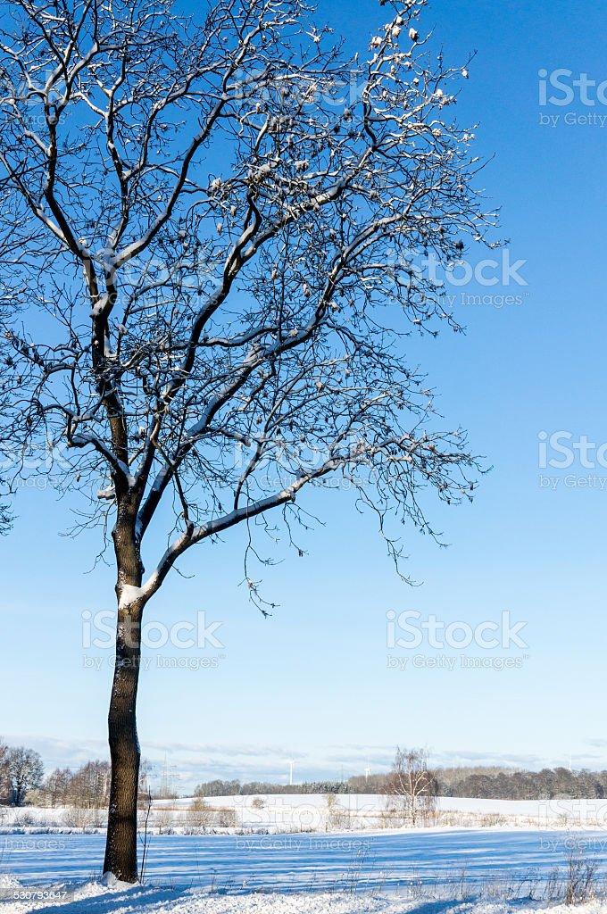 Cielo, neve e Albero solitario sul campo foto stock royalty-free