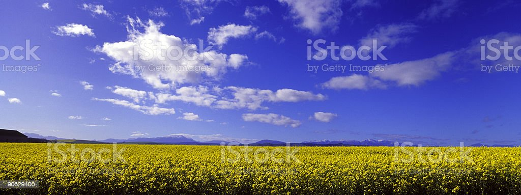 Blue Sky Meadow stock photo