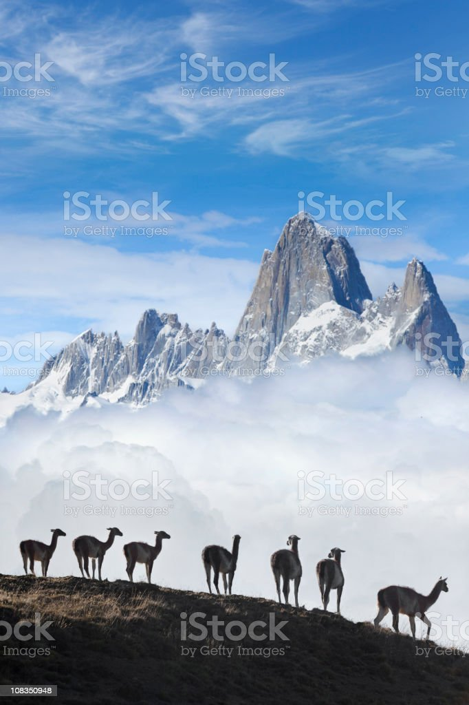 Blue sky over Fitz Roy guanacos Patagonia Argentina Southamerica stock photo