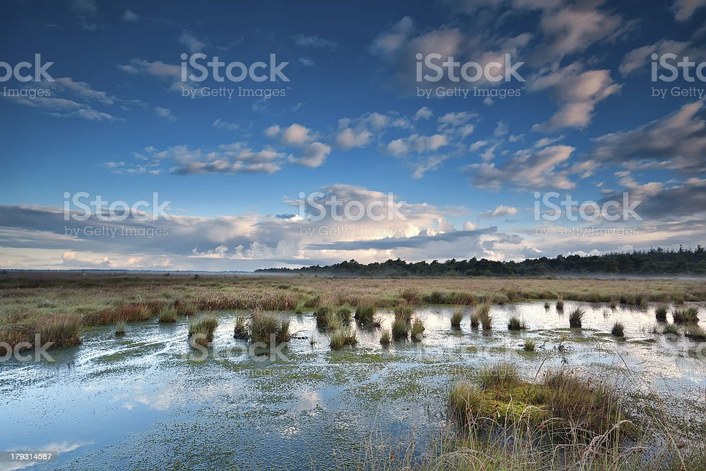 blue sky over swamp royalty-free stock photo