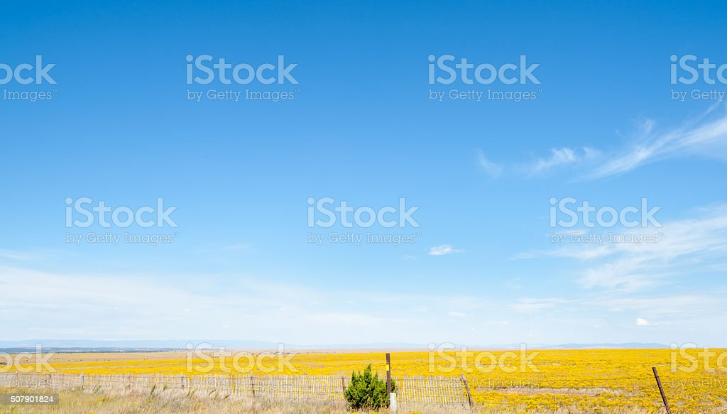 Blue sky over yellow fields in Arizona countryside stock photo