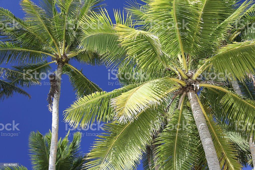 blue sky palm boracay island philippibnes royalty-free stock photo