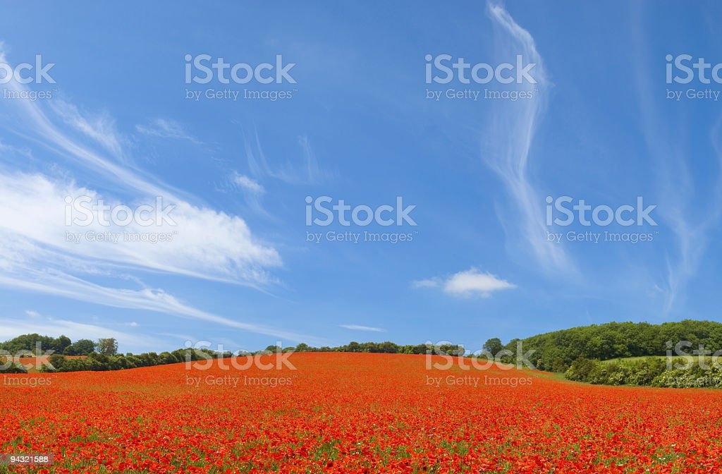 Blue sky, red poppies royalty-free stock photo