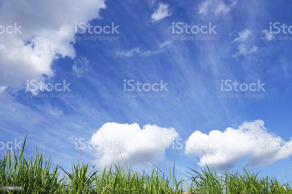 Blue sky with green grass stock photo