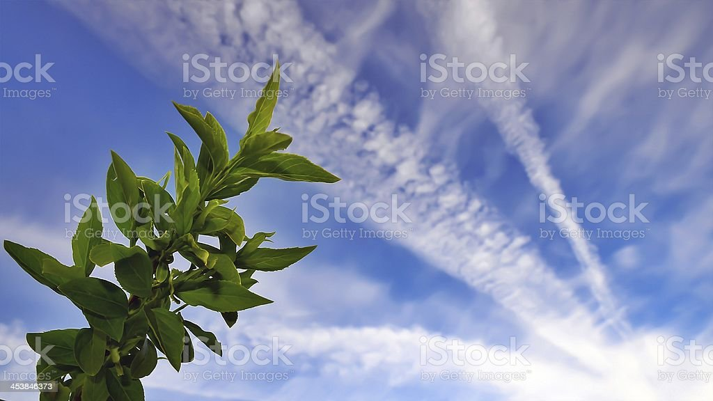 Blue sky with vapour trails and leaves royalty-free stock photo
