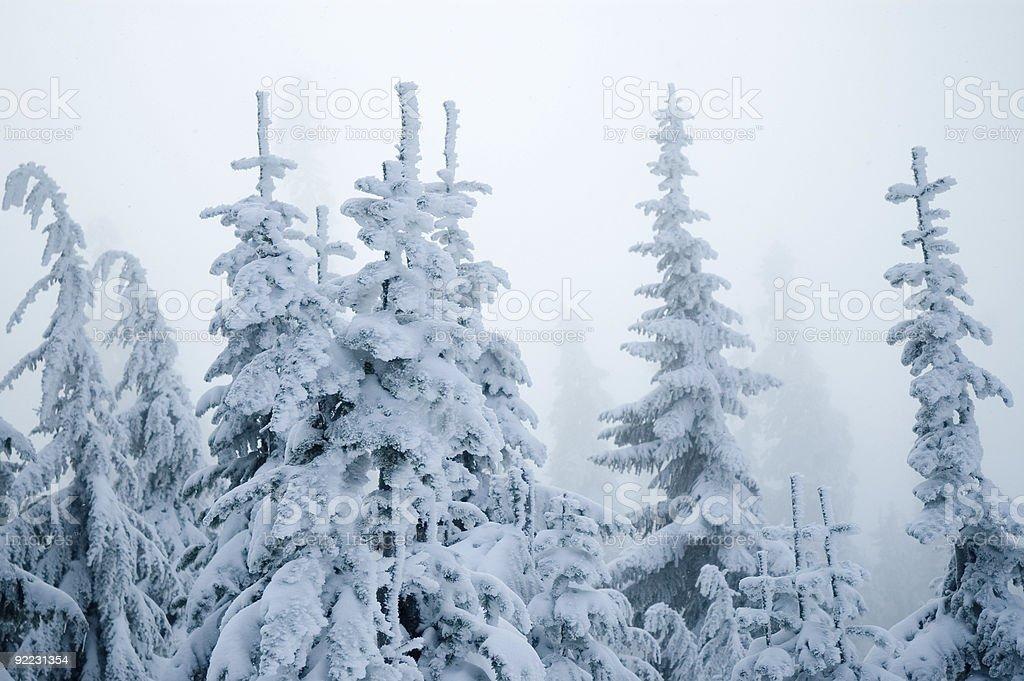 Blue Snow - Winter Wonderland 8 royalty-free stock photo