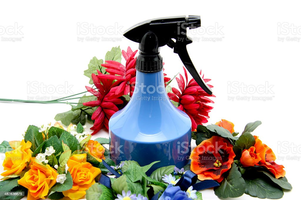 Blue spray bottle with rose flower arrangement stock photo