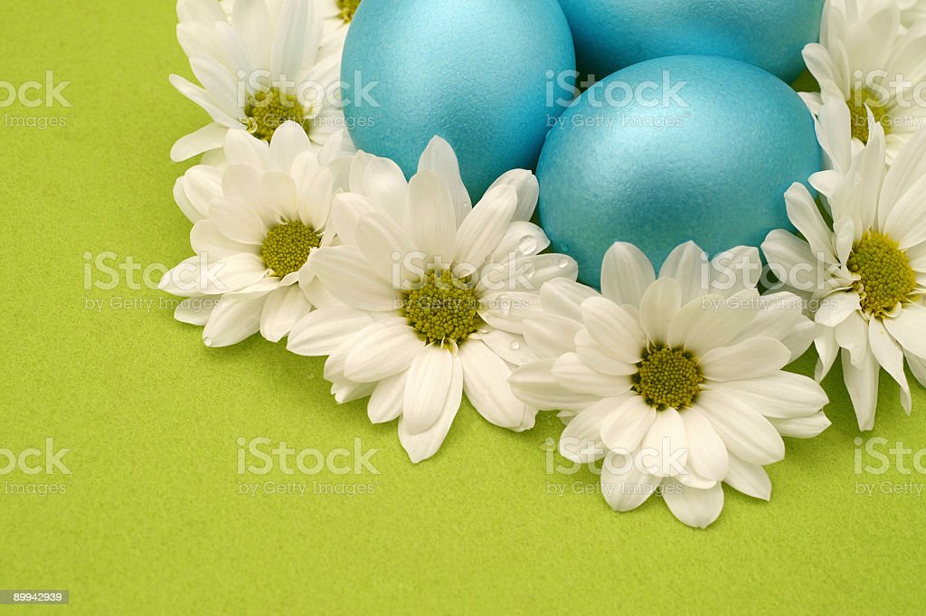 Blue Spring Eggs stock photo