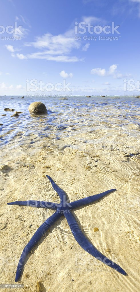 Blue starfish on beach at Cook Island, Polynesia royalty-free stock photo