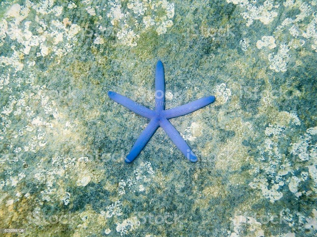 Blue starfish on the rock in sea stock photo