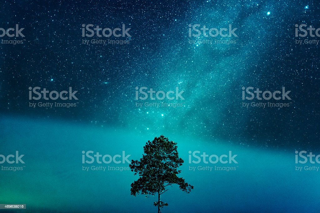 A blue starry night with a tree stock photo