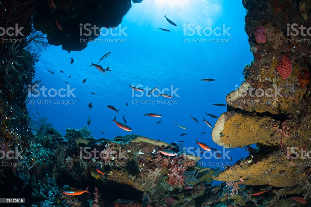 Blue Streak Fusiliers School, Blue Ocean Window, Raja Ampat, Indonesia stock photo