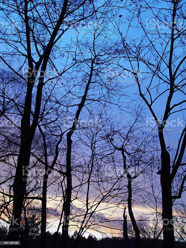 Blue Sunset stock photo