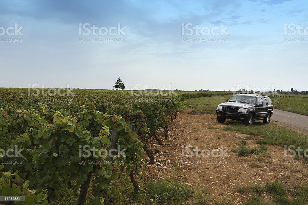 Blue SUV parked among vineyards in Burgundy, France royalty-free stock photo