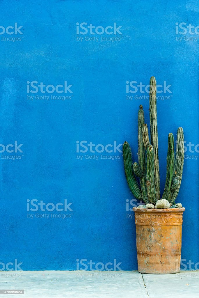 Blue textured wall with a cactus plant in a pot stock photo
