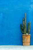Blue textured wall with a cactus plant in a pot