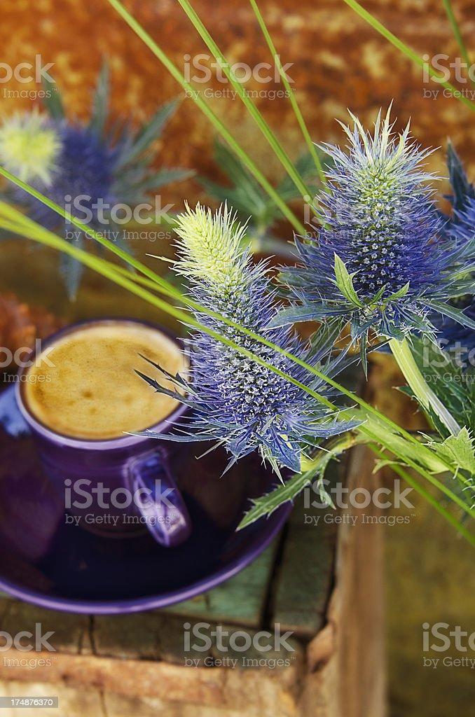 Blue Thistle royalty-free stock photo