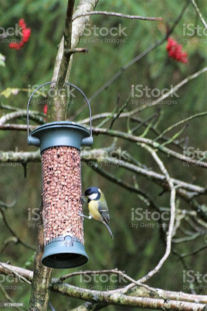 Blue tit and feeder stock photo