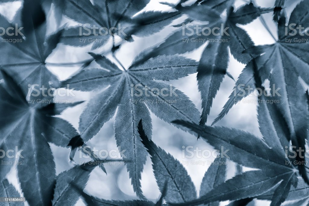 blue toned leaves royalty-free stock photo
