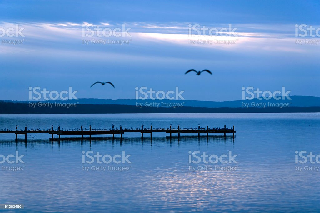 Blue twilight at lake with flying gulls (XL) royalty-free stock photo