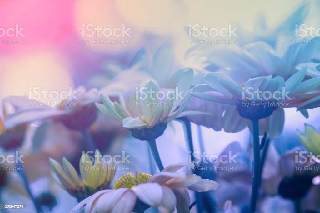 Blue vintage flower background. Flowers in a garden stock photo