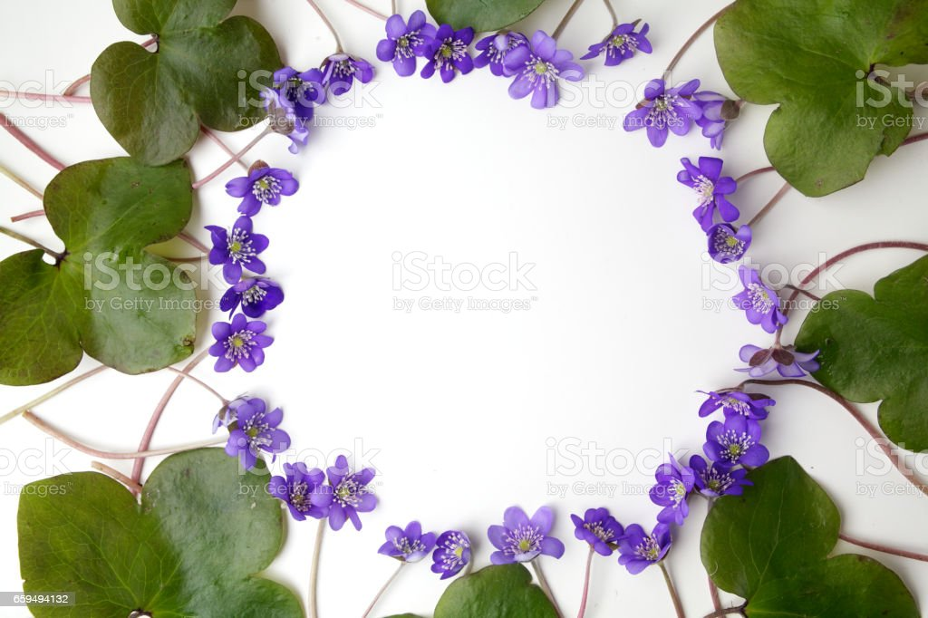 blue viola flowers frame on white background. Flat lay, top view stock photo
