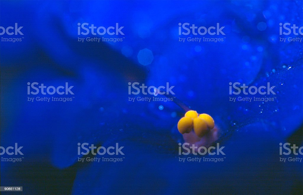 Blue violet royalty-free stock photo