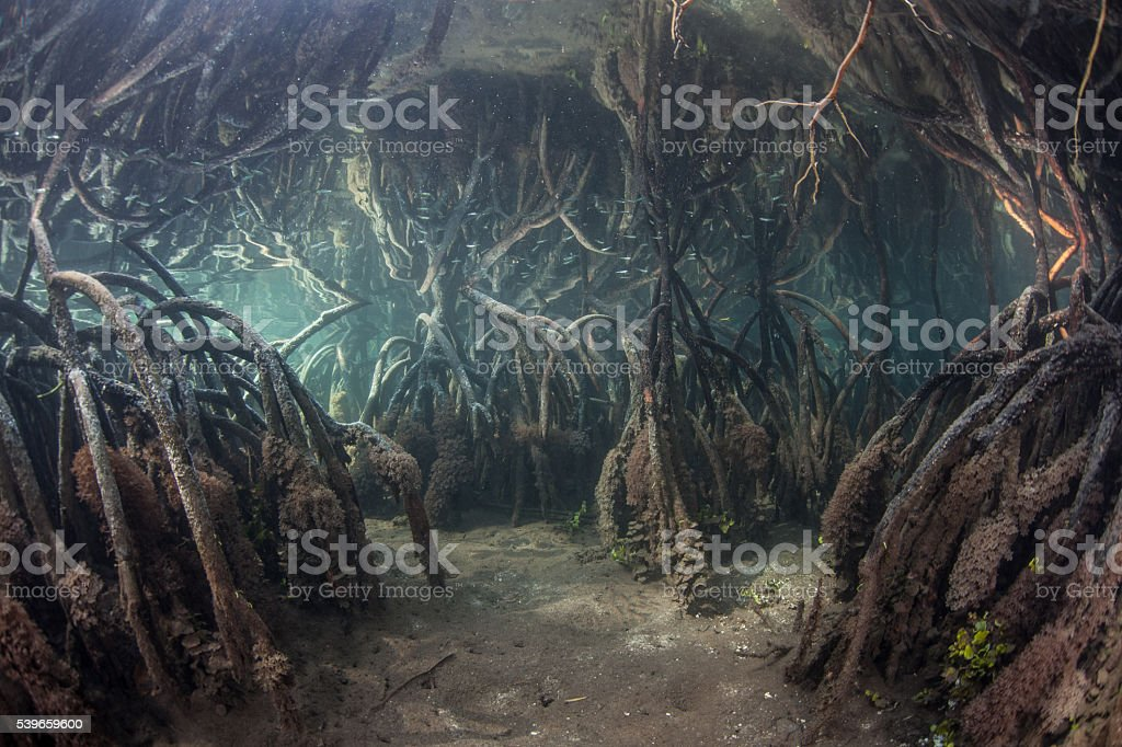 Blue Water Mangrove at High Tide stock photo