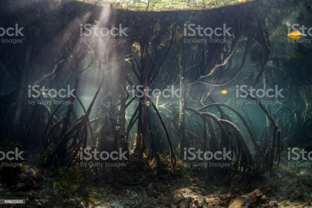 Blue Water Mangrove Forest Underwater stock photo
