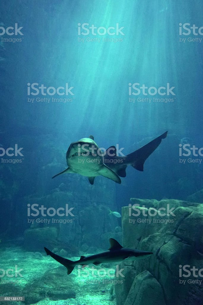 blue water white killer stock photo