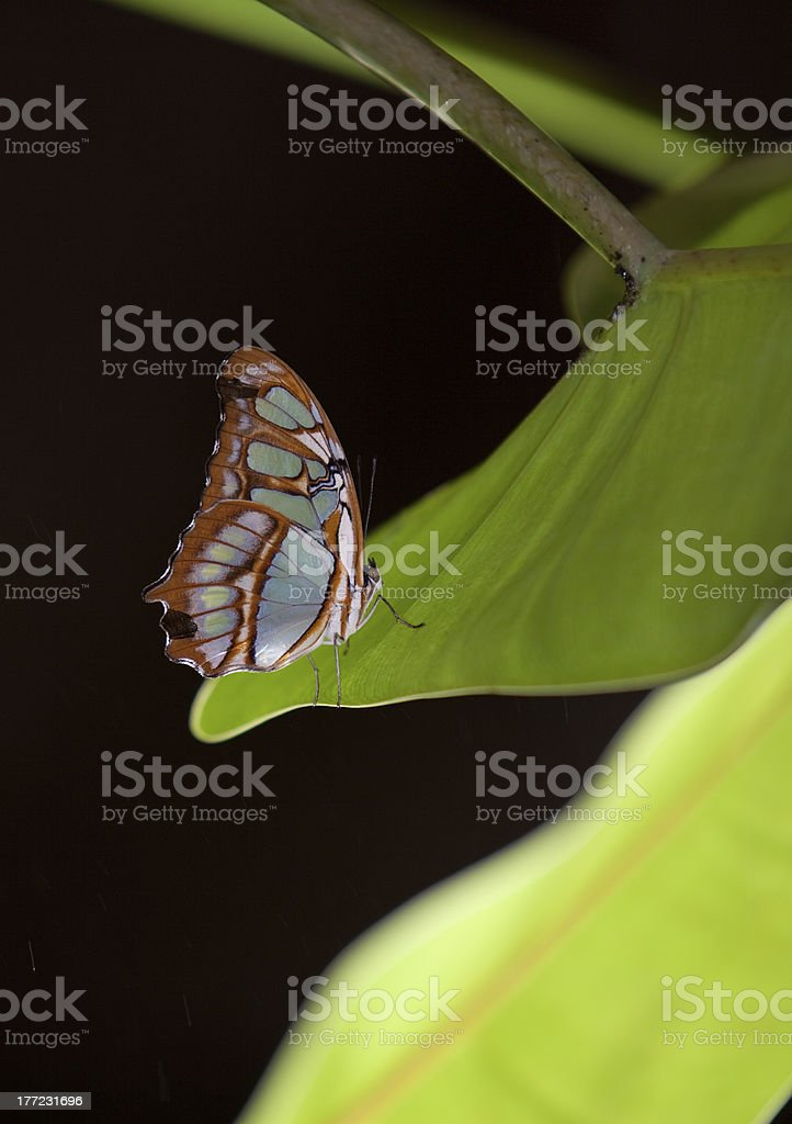 Blue Wave Butterfly stock photo
