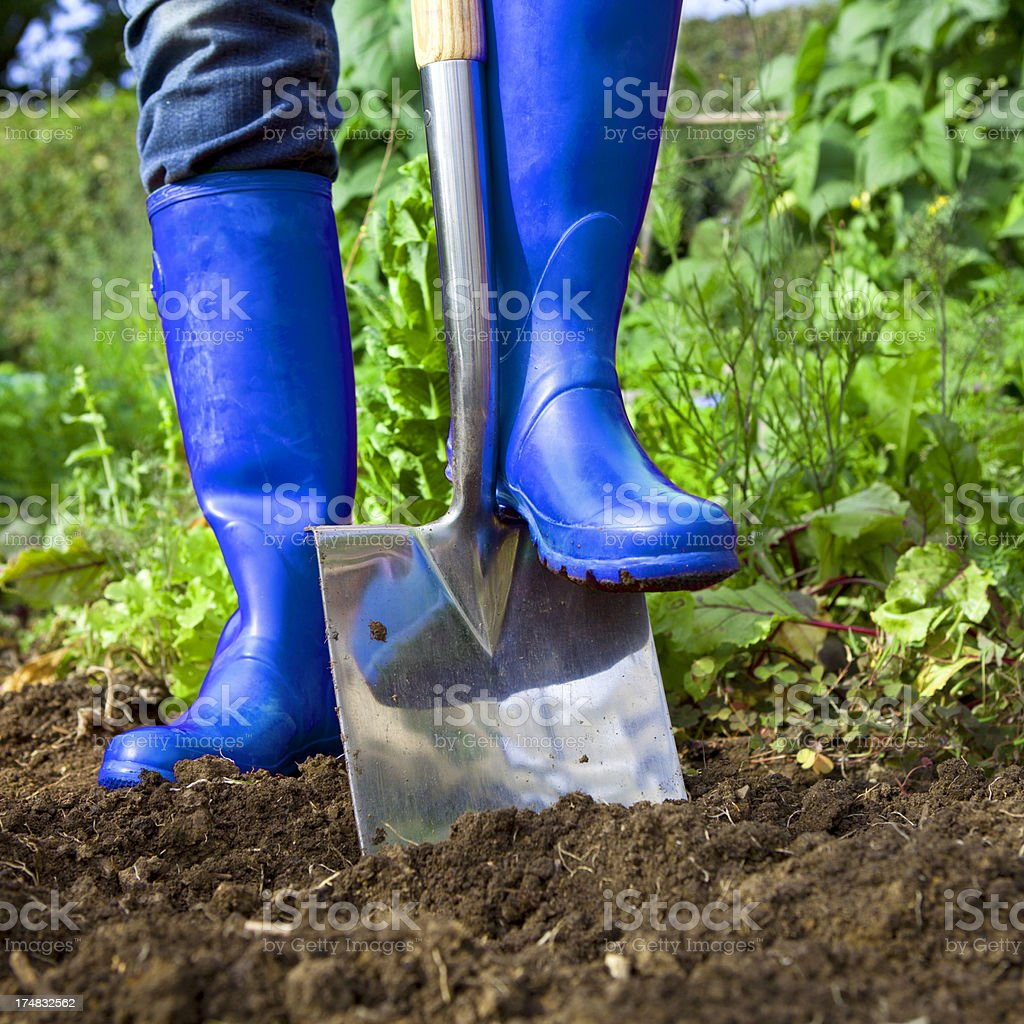 Blue Wellies Digging in a Garden royalty-free stock photo