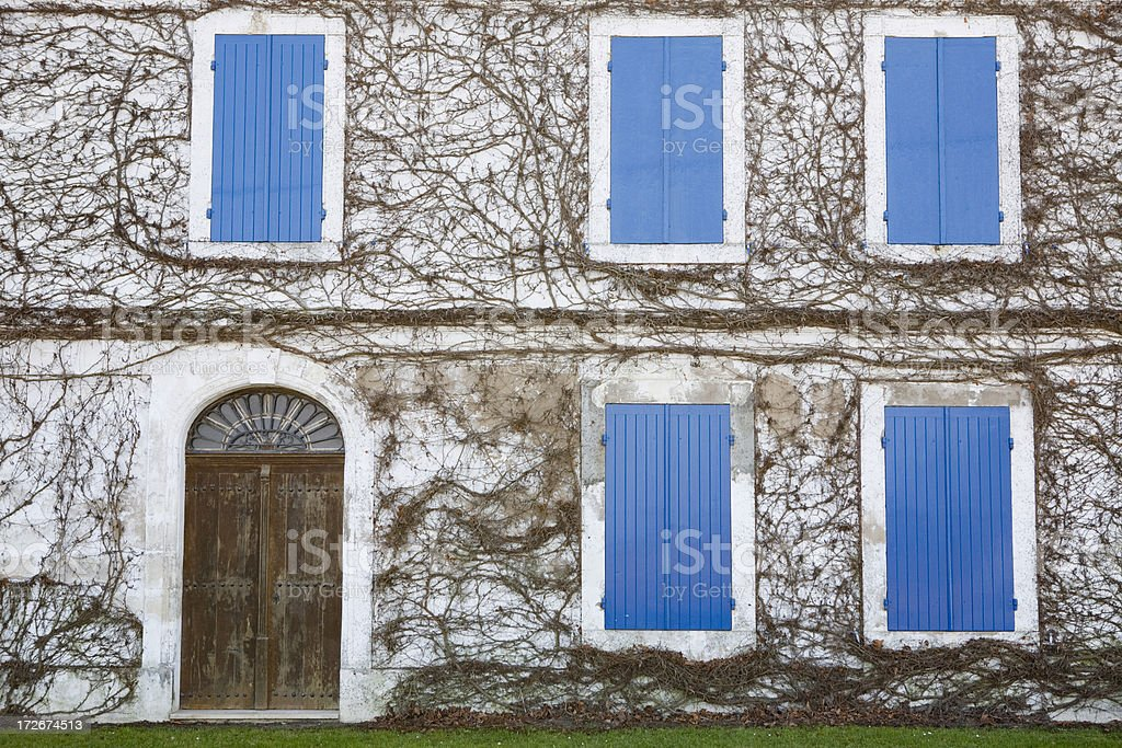 Blue windows and ivy covered building royalty-free stock photo