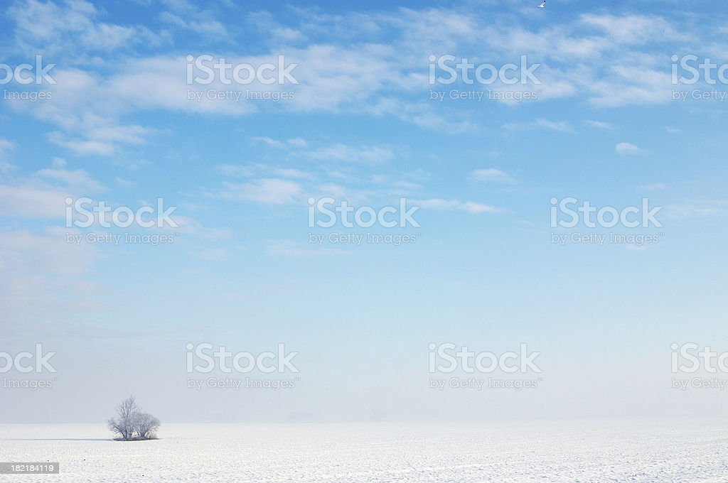 Blue winter and bush royalty-free stock photo