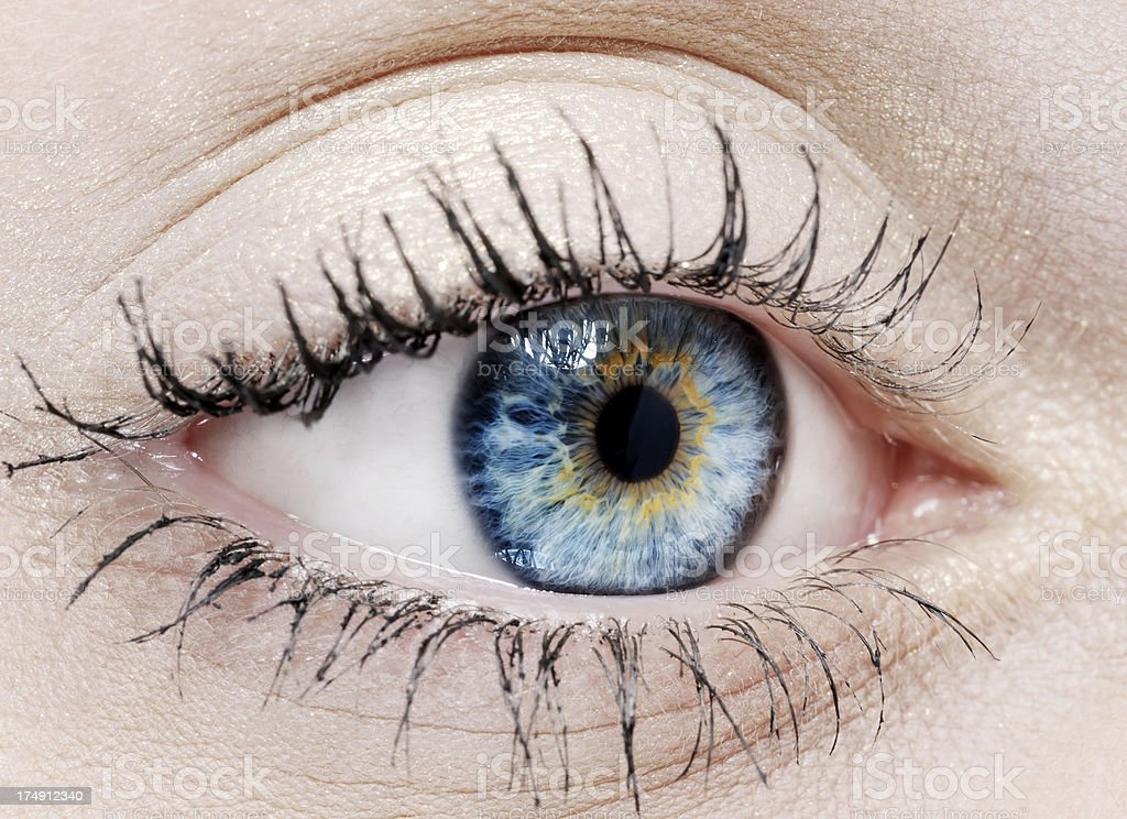 blue with yellow eye royalty-free stock photo