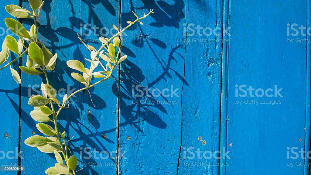 Blauen hölzernen Hintergrund mit Efeu Lizenzfreies stock-foto