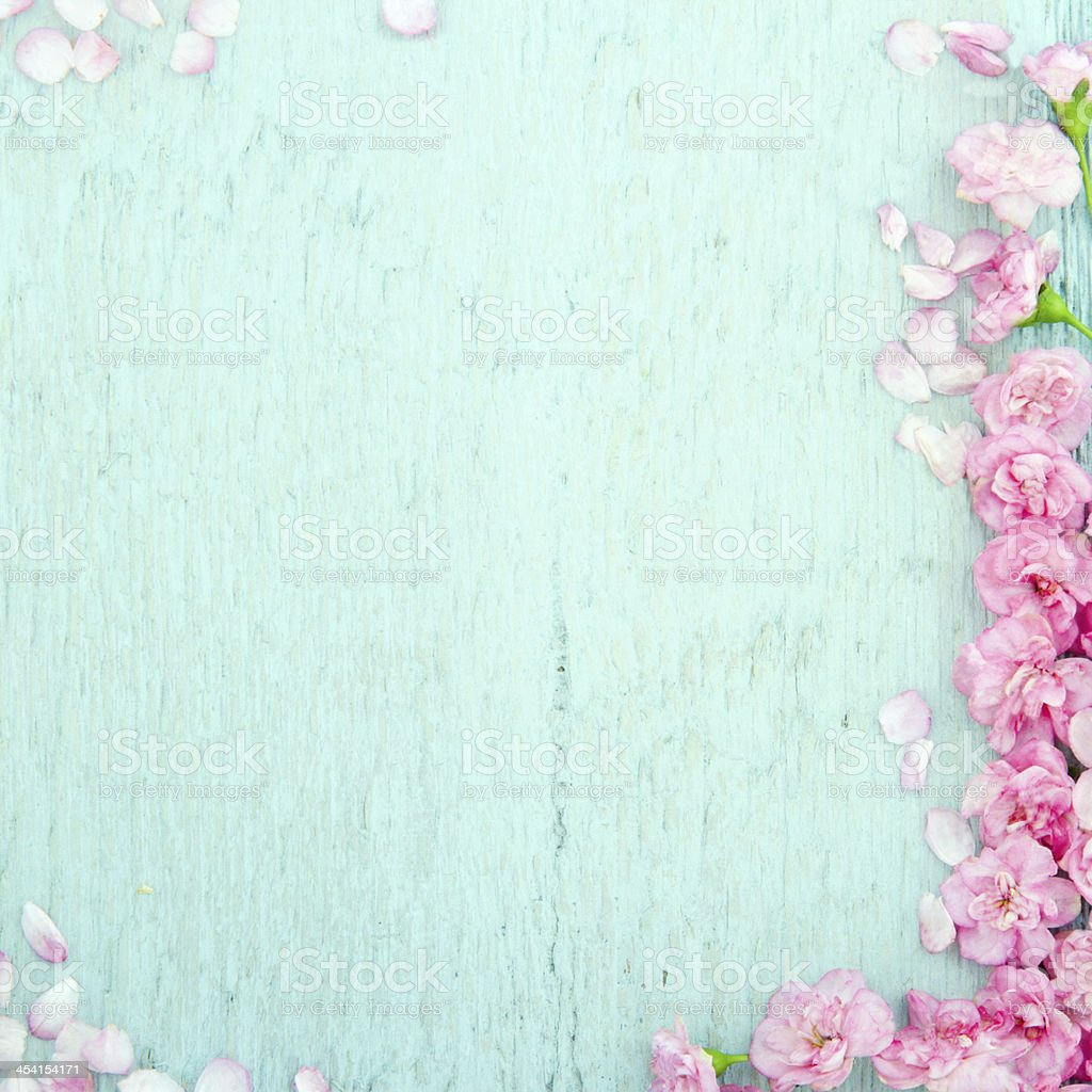 Blue wooden background with pink flowers stock photo