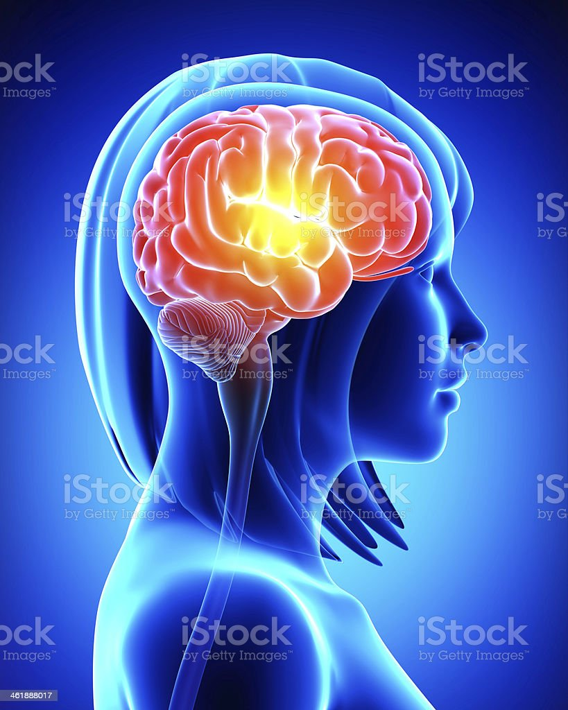 Blue X-Ray image of a girl with her brain highlighted in red stock photo