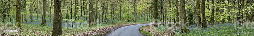 Bluebell Road royalty-free stock photo