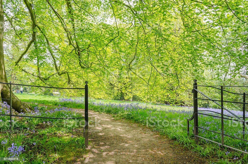 Bluebell Spring Day stock photo