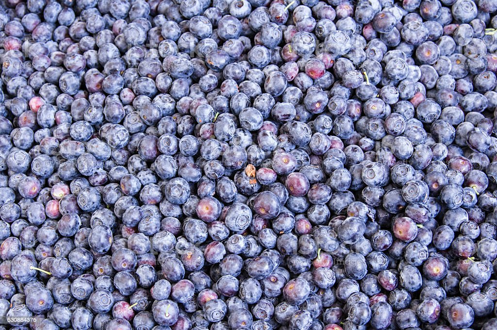 Blueberries at the farmer's market stock photo