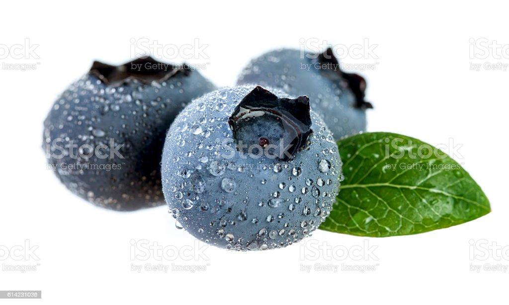 Blueberries. stock photo