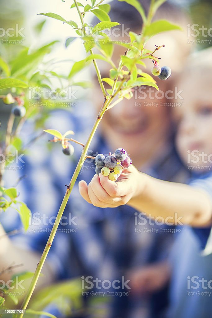 Blueberry Bush and Family stock photo
