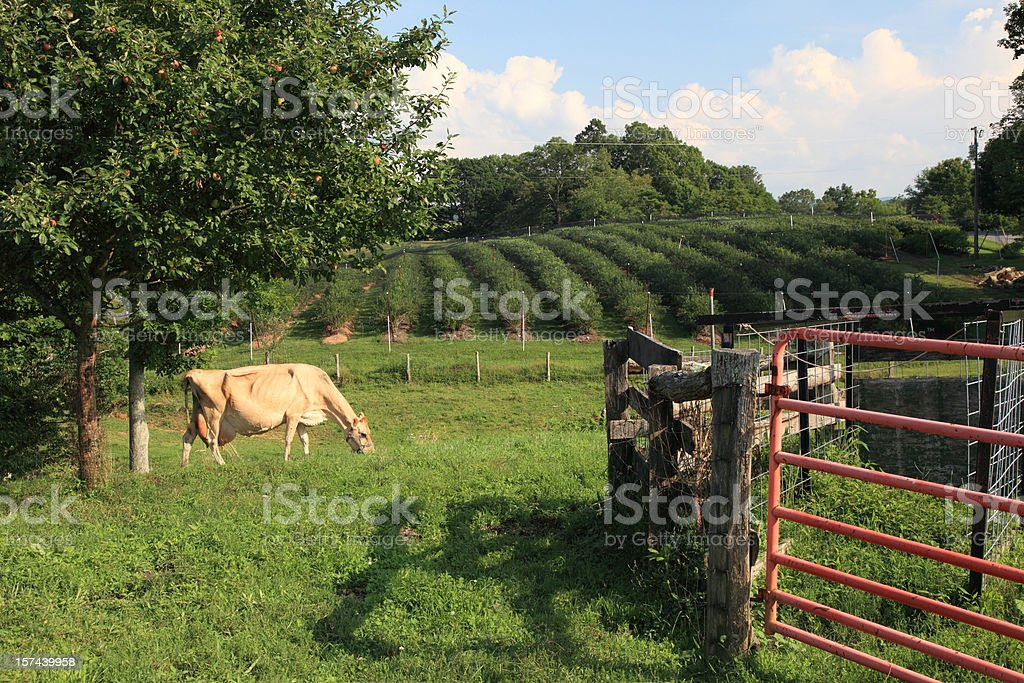 Blueberry Farming stock photo