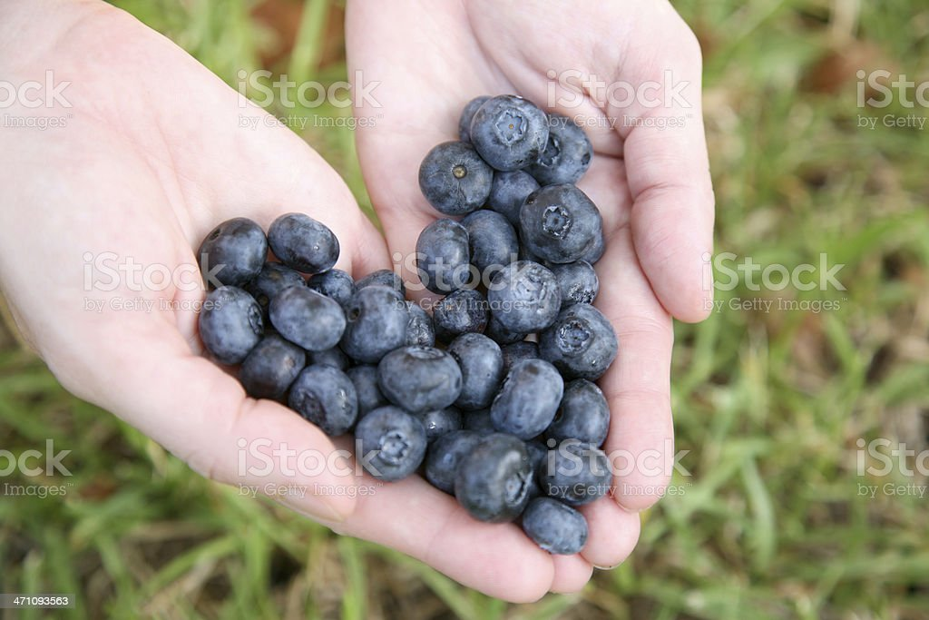 Blueberry Heart in Hand royalty-free stock photo
