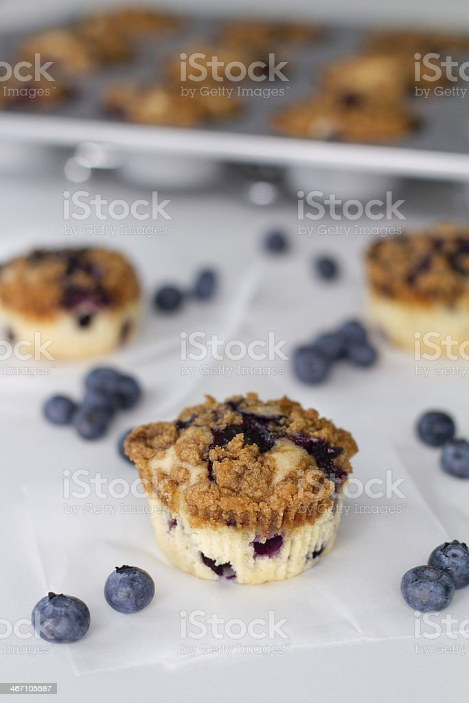 blueberry muffins with tray royalty-free stock photo