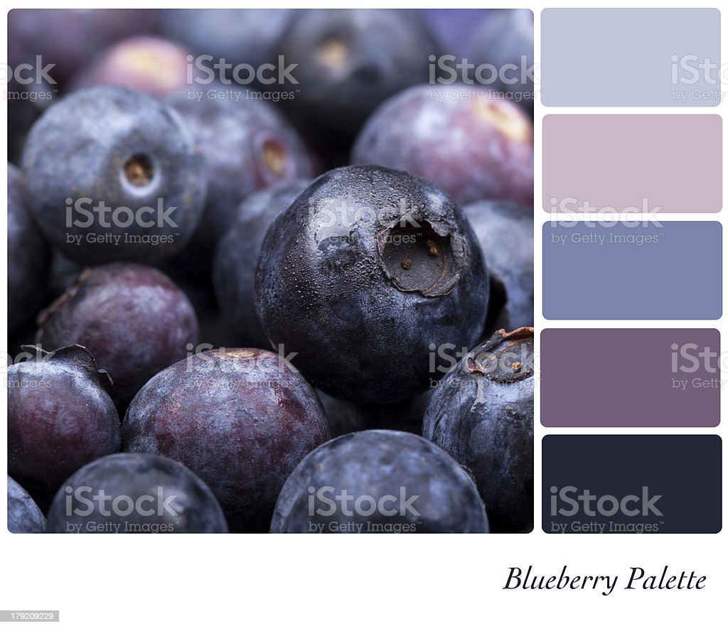 Blueberry Palette royalty-free stock photo