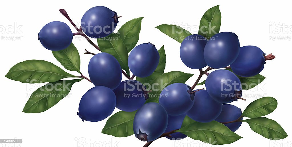 Blueberry royalty-free stock photo