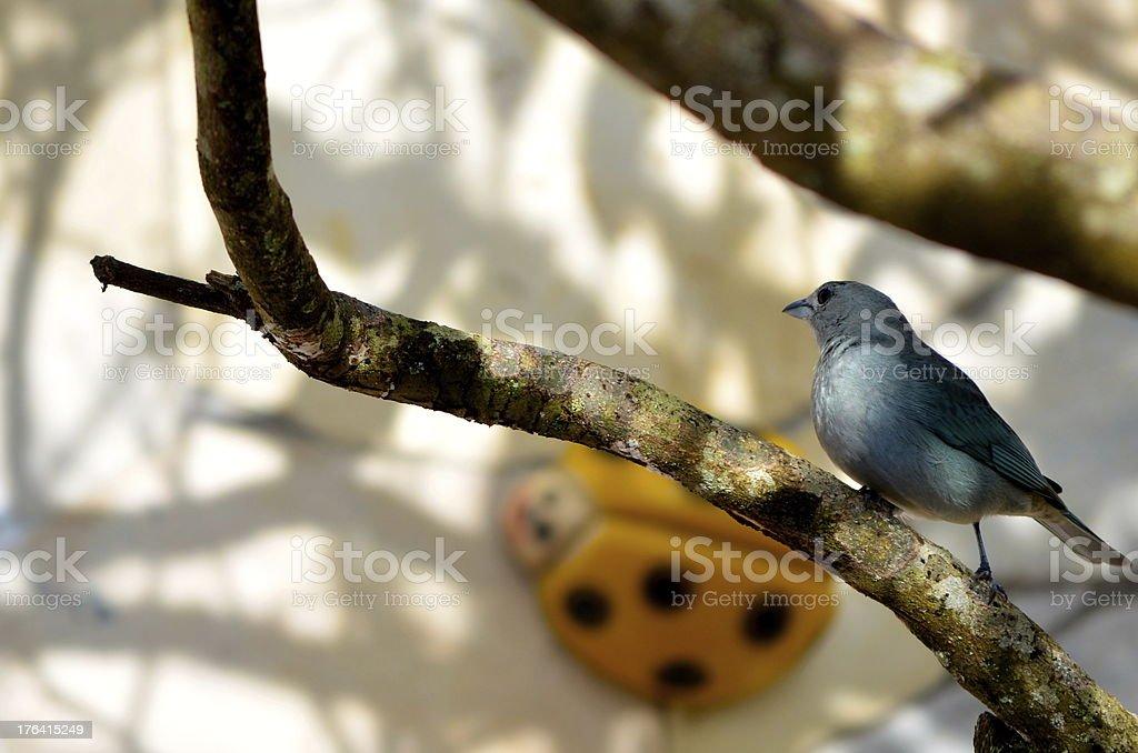 Bluebird Genießen Sie die Freiheit, die in einem hellen Abend Lizenzfreies stock-foto