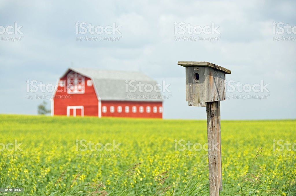Bluebird House and Red Barn stock photo